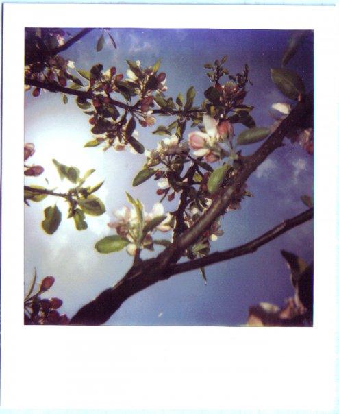 Ode to Polaroid, circa 2006.