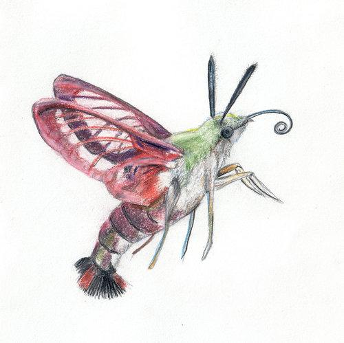 Clearwing+Hummingbird+Moth.jpg