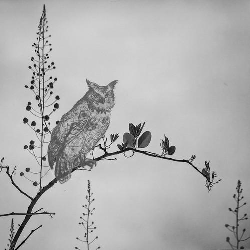father owl.jpg