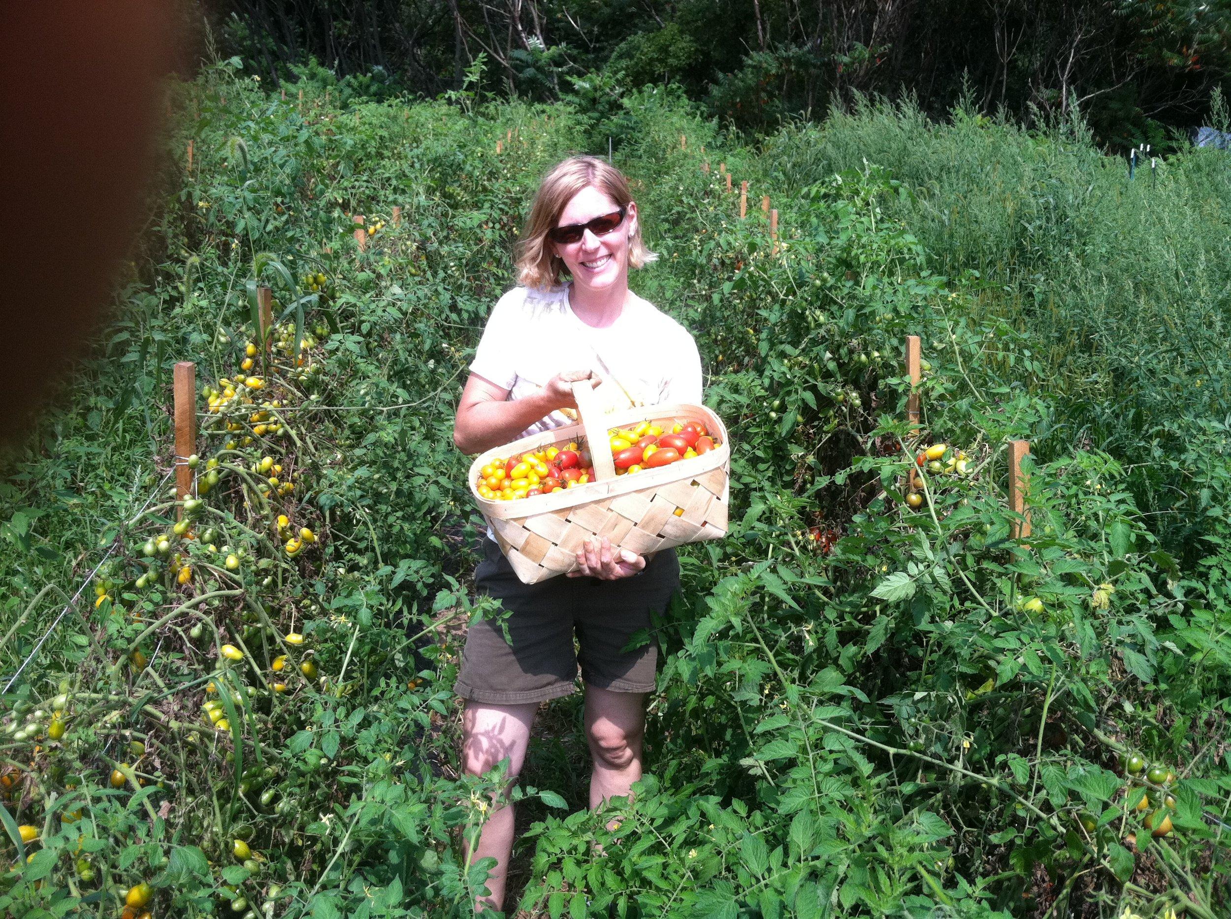 Jen harvesting tasty cherry tomatoes!