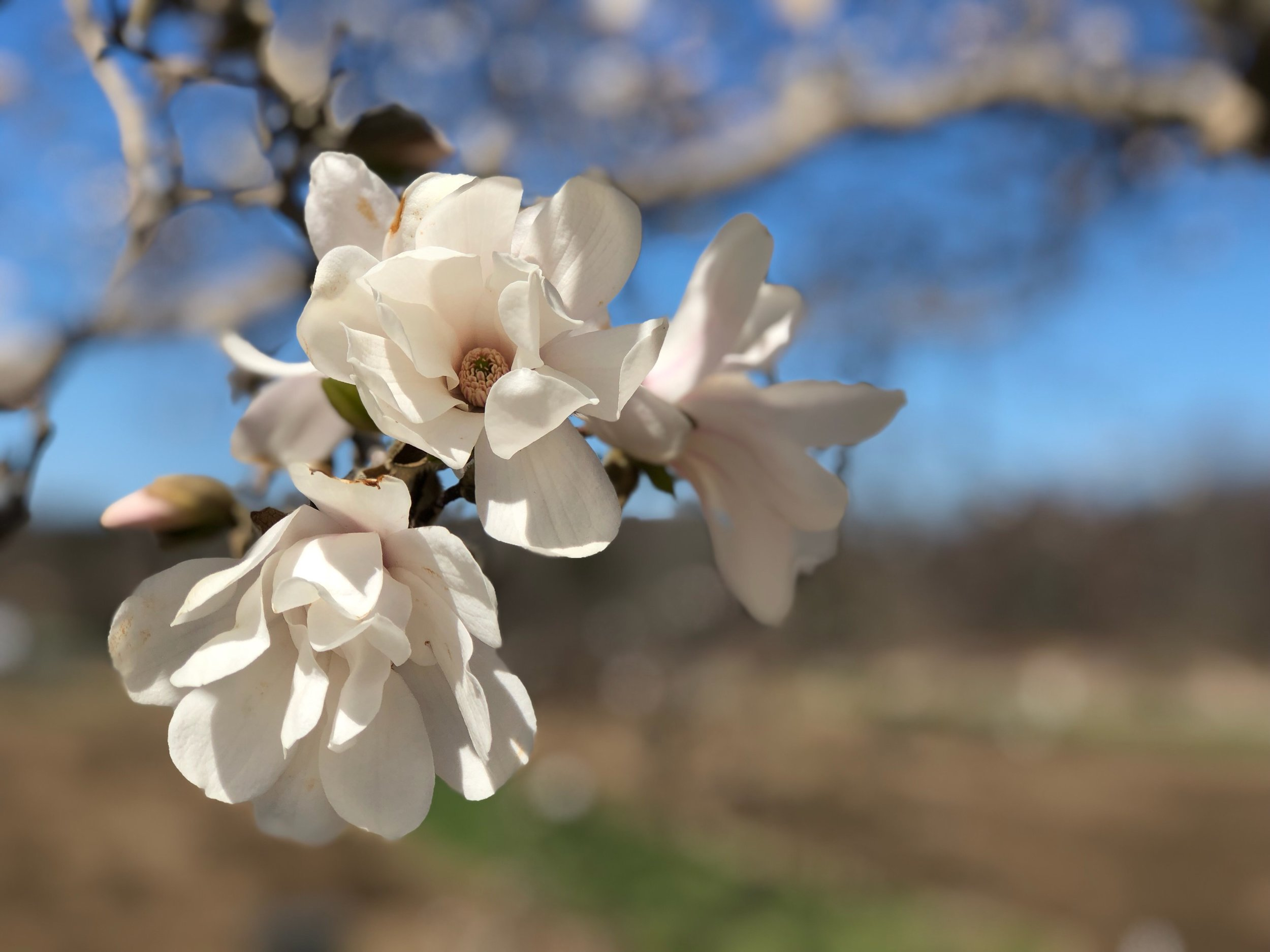 Spring blossoms on the farm (credit: Heidi Stowell-Nichols)