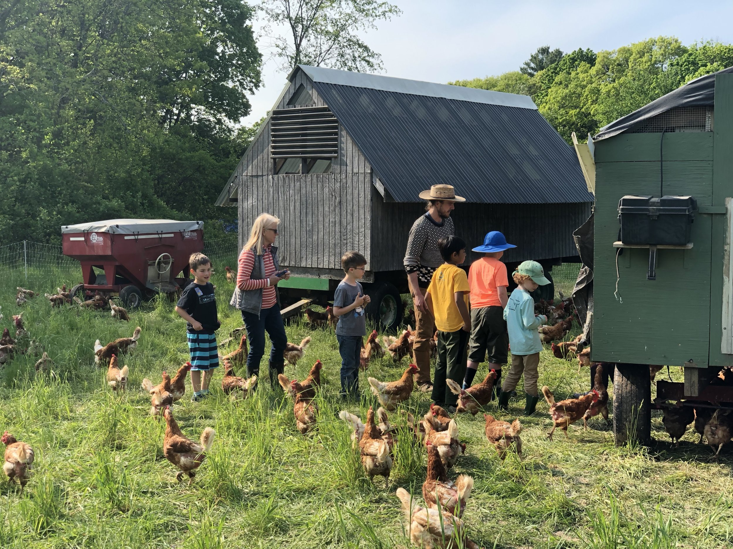 The Farmer's Helper program paying a visit to our old laying flock!