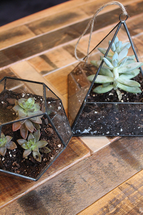 Geometric Hanging Terrariums