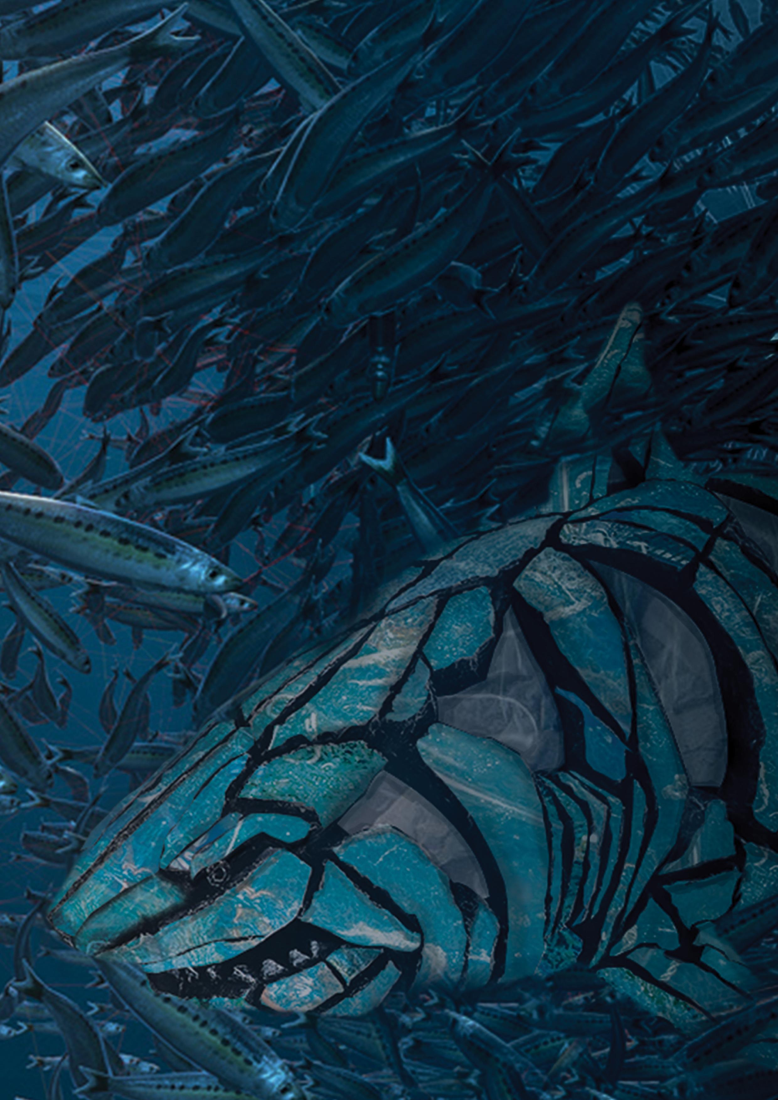 shark 3.png