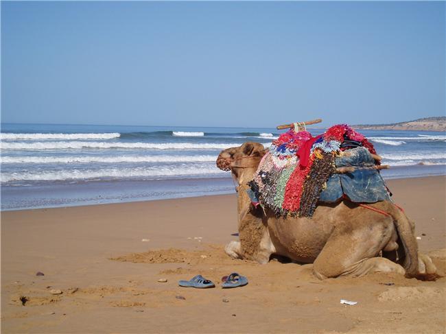 ESSAOUIRA NIGHTS   Accommodation Options in Essaouira