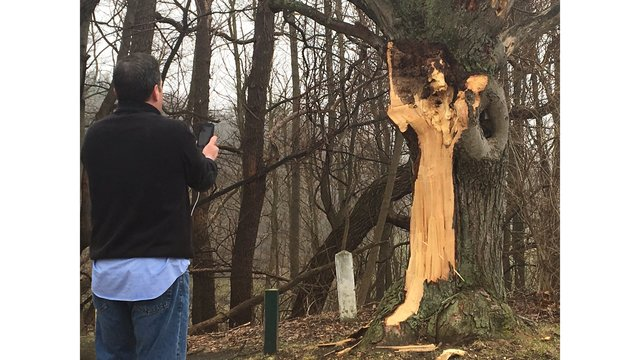 News 8 in Rochester's John Kucko visiting the tree. (Image credit: rochesterfirst.com)