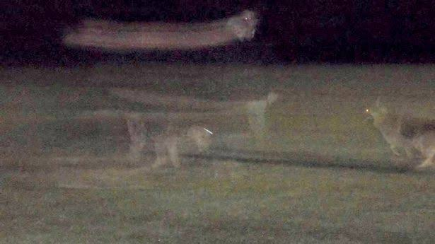 Are these paranormal pups, or just a faulty frame rate?