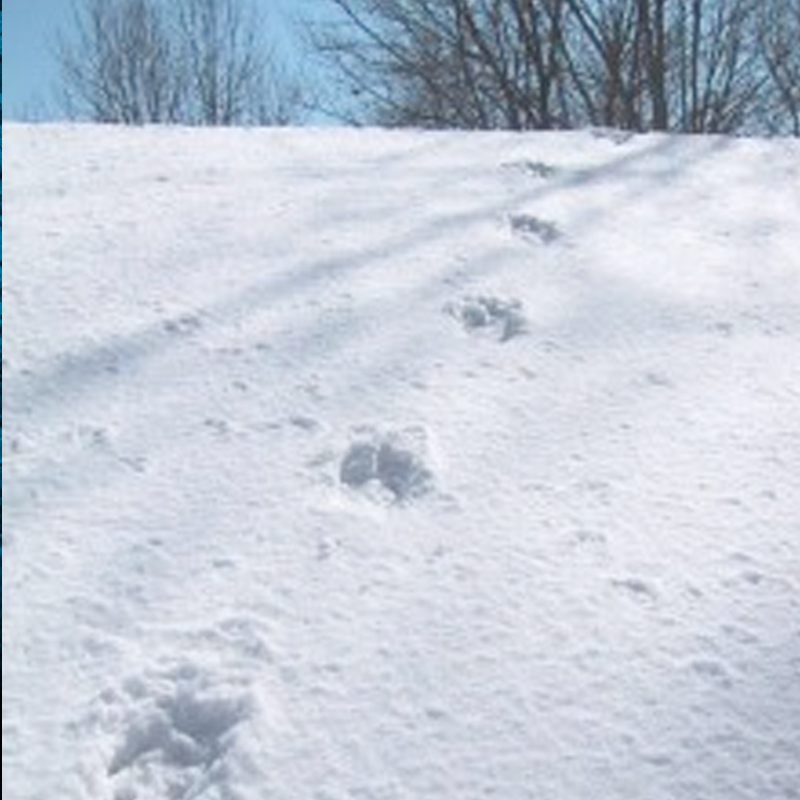 A photo of the footsteps found on the Winkelmans' roof.
