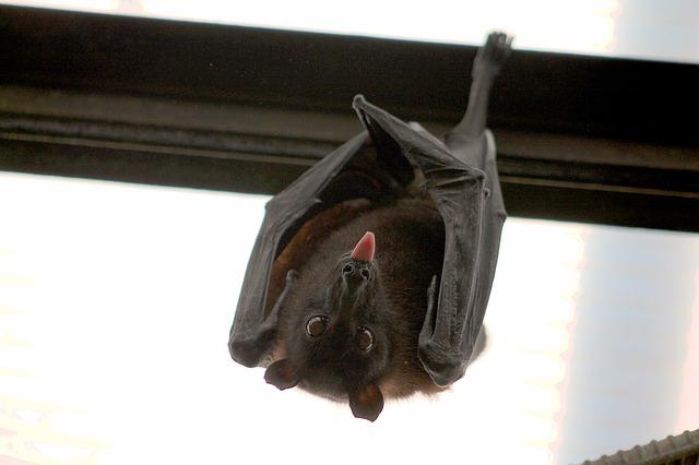 bat-1268650_640.jpg