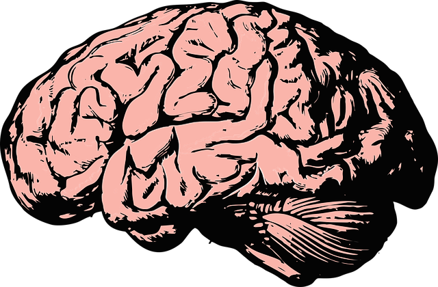 brain-2845862_640.png