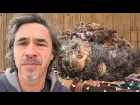 Peter Caine posed in front of the head he claims belonged to a Bigfoot.