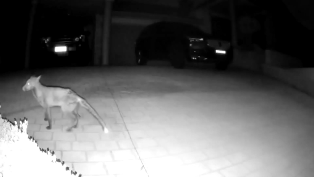 A still image from the surveillance footage.