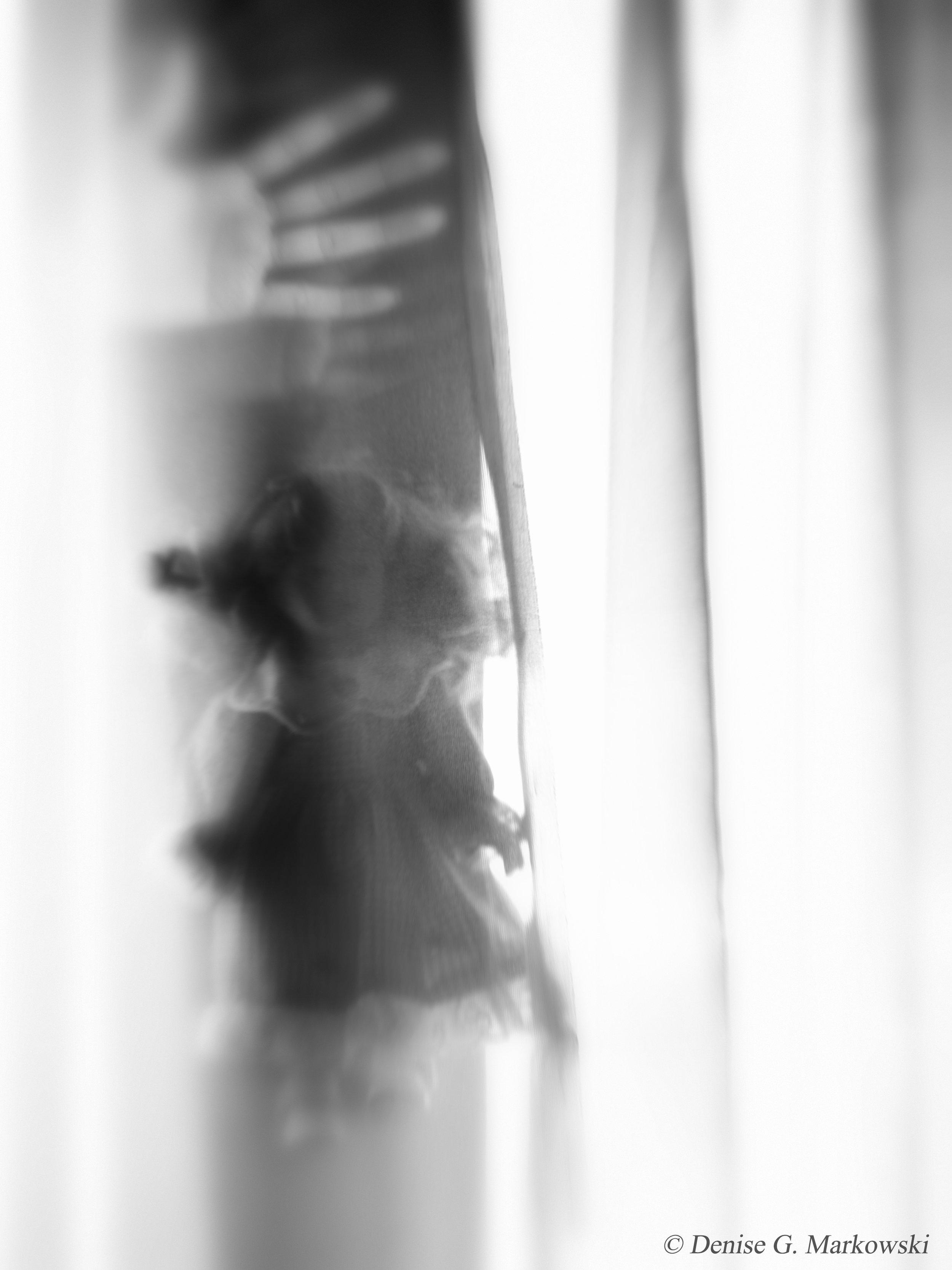 Beyond-the-veil.jpg