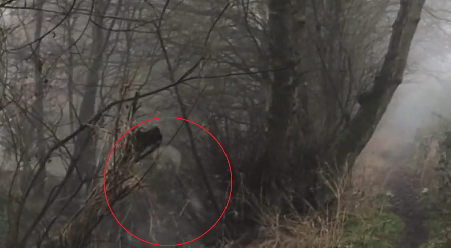 A still image from the video; encircled is the purported ghost captured on film by Wakefield.