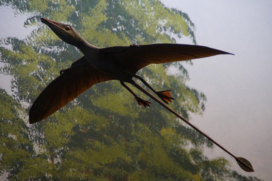 pterosaur-1577089_1920.jpg