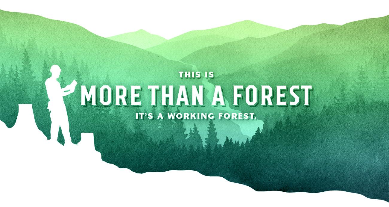Working-forest.jpg
