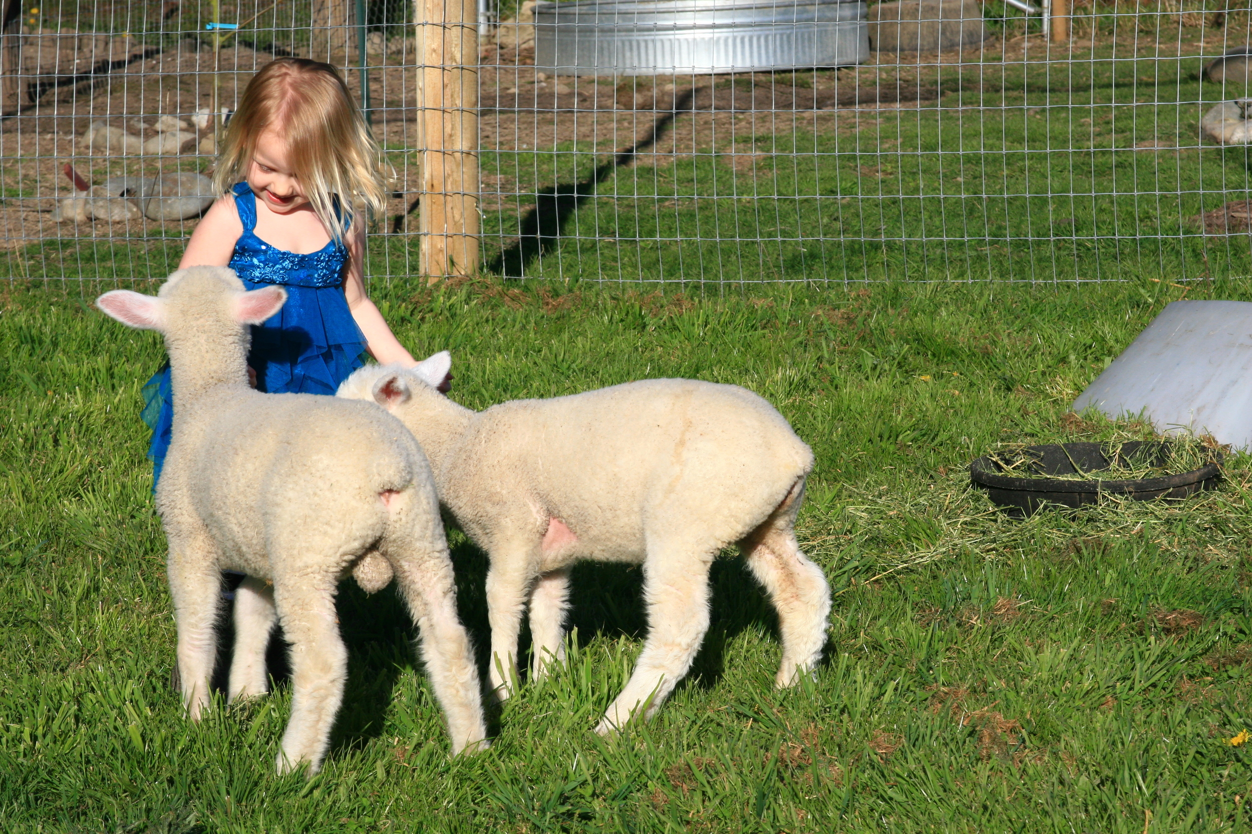 OUr youngest daughter with 2 bummer (bottle fed) lambs.