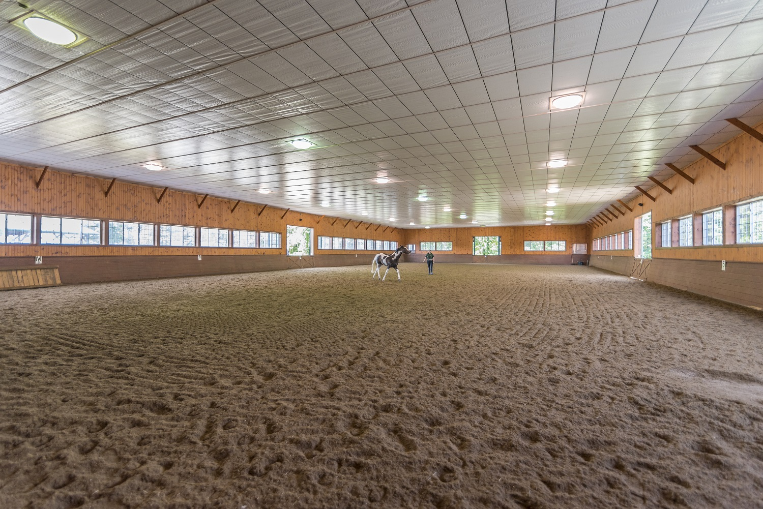 attached to the barn is a 80 x 160 foot indoor arena.  The footing is made from playground sand, eurofelt, and oil which reduces dust and absorbs impact