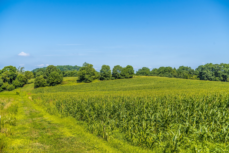 ... between picturesque rolling fields ...
