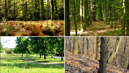 Seasons of Trees.jpg