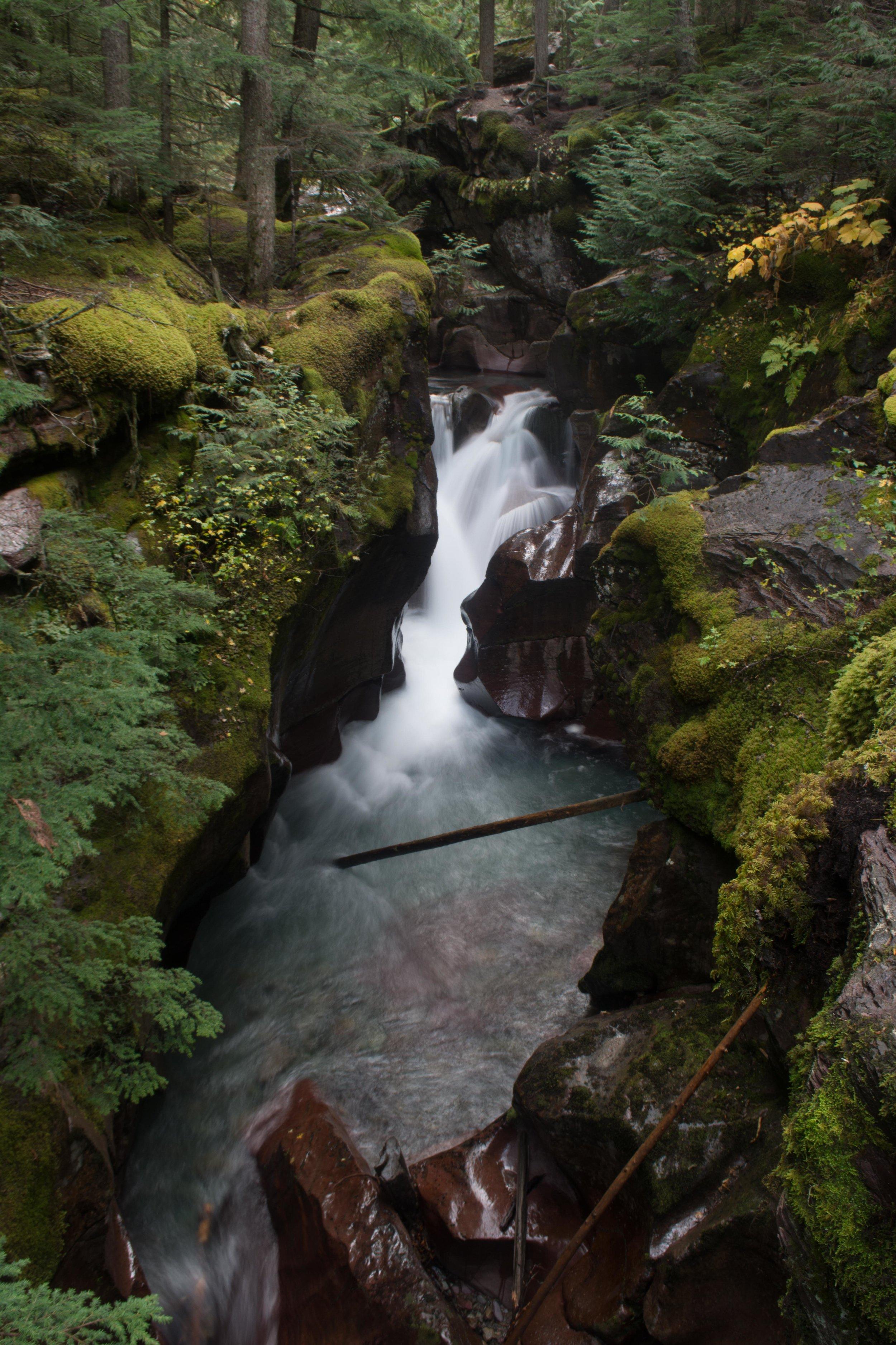 Avalanche Creek | Glacier National Park