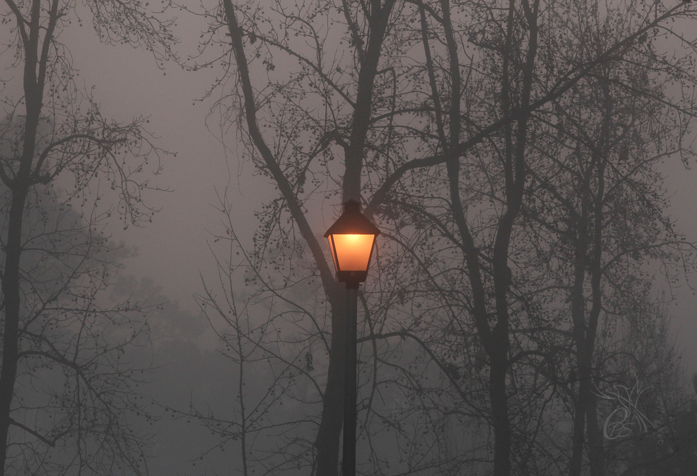 Lamp in the Fog