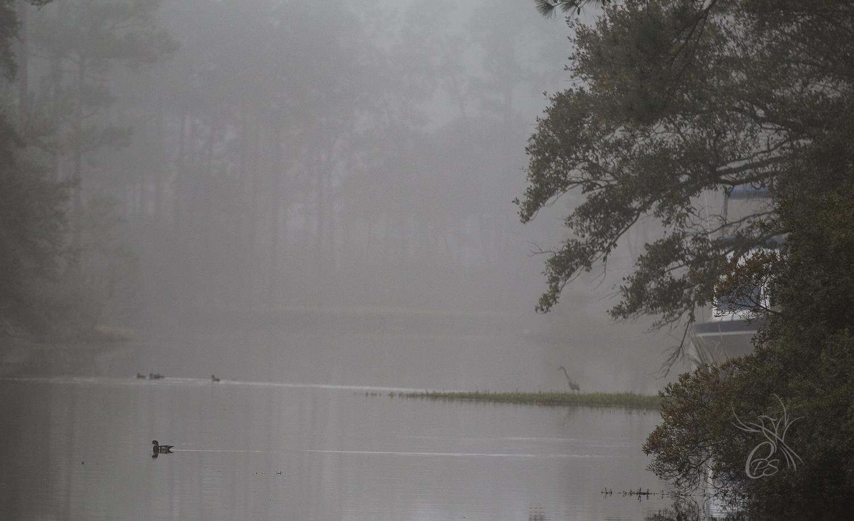 Mallards & Heron in the Fog