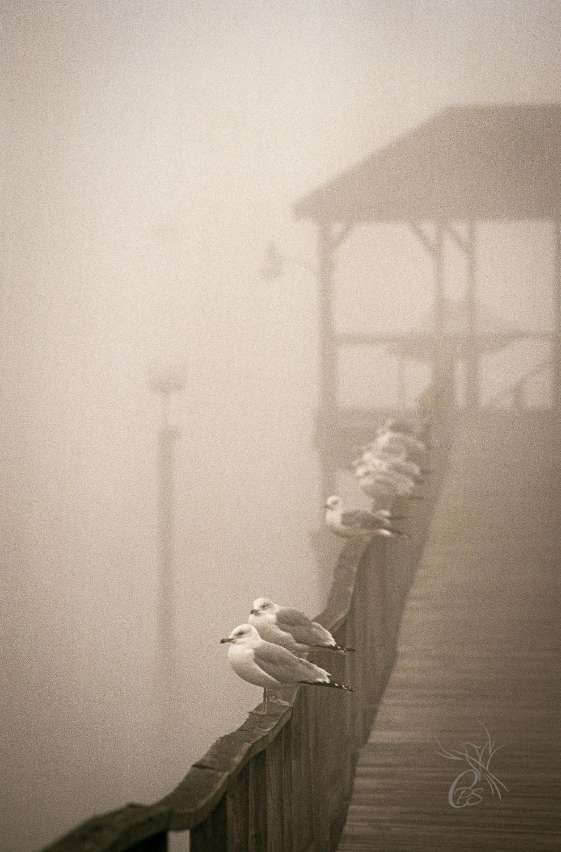 Seagulls on Dock