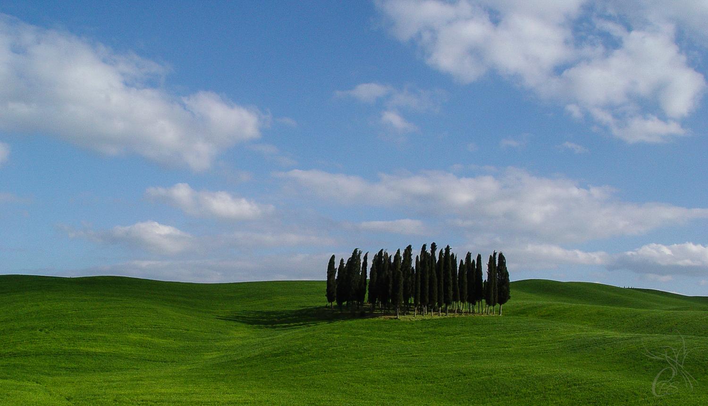 Italy: Tuscany Cypress Trees