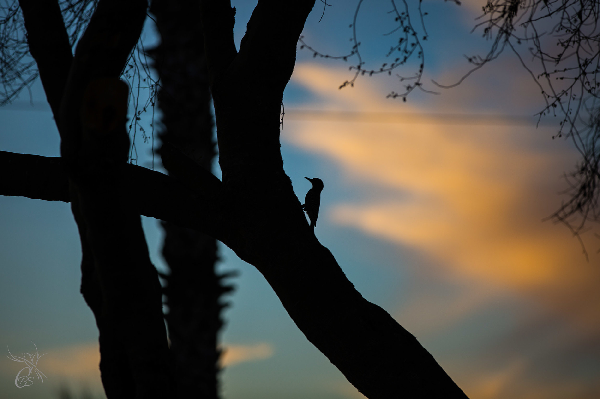 Woodpecker Sunset