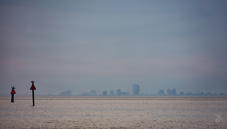 Bird on City Skyline