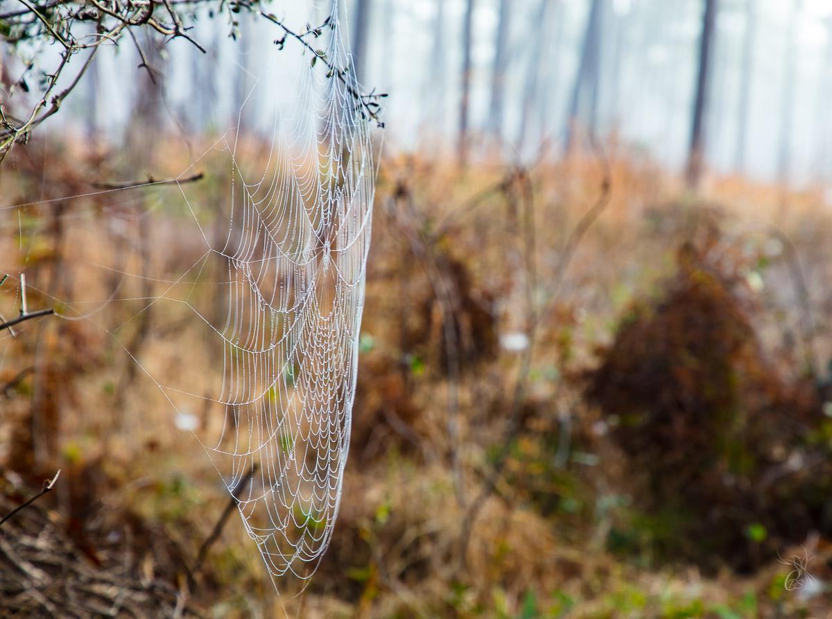 Glistening Cobweb in Fog