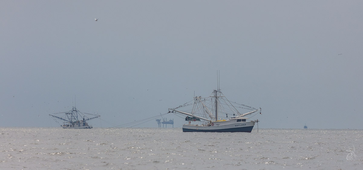 Shrimpers in the foreground; oil wells in the background. It is still south Louisiana, with scars from the Deepwater Horizon blowout and even a memorial on the island. Grand Isle, LA