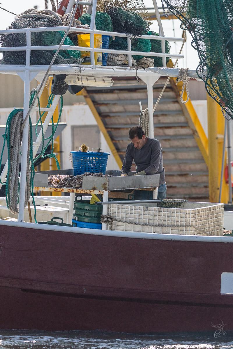 A shrimper, culling his catch - Grand Isle, LA