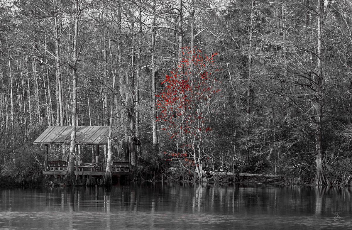 Red Winter Tree