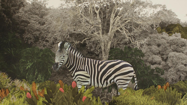 02_BS_image still_small zebra.jpg