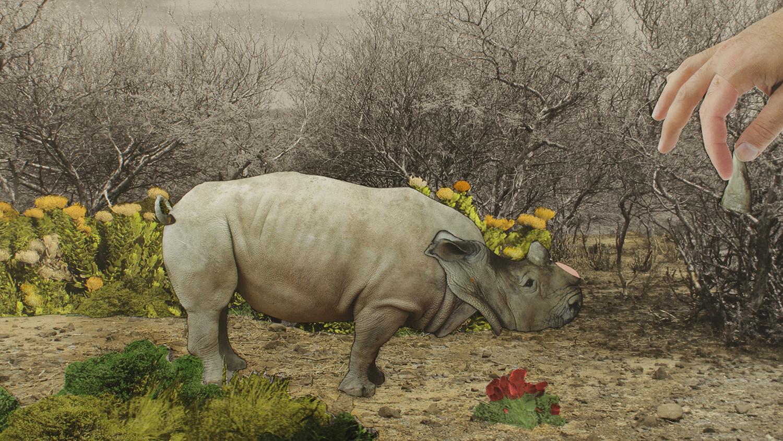 04_BS_image still_small rhino.jpg