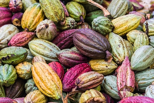 In case you didn't know what a cacao bean looks like! (via Pinterest)