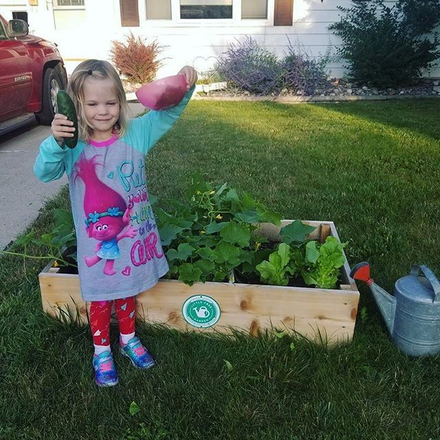 A message from this tiny gardener: the cucumbers in #LittleFreeGarden no. 236 are ready to harvest! 🌱 - - #MoorheadProud #kidswhogarden