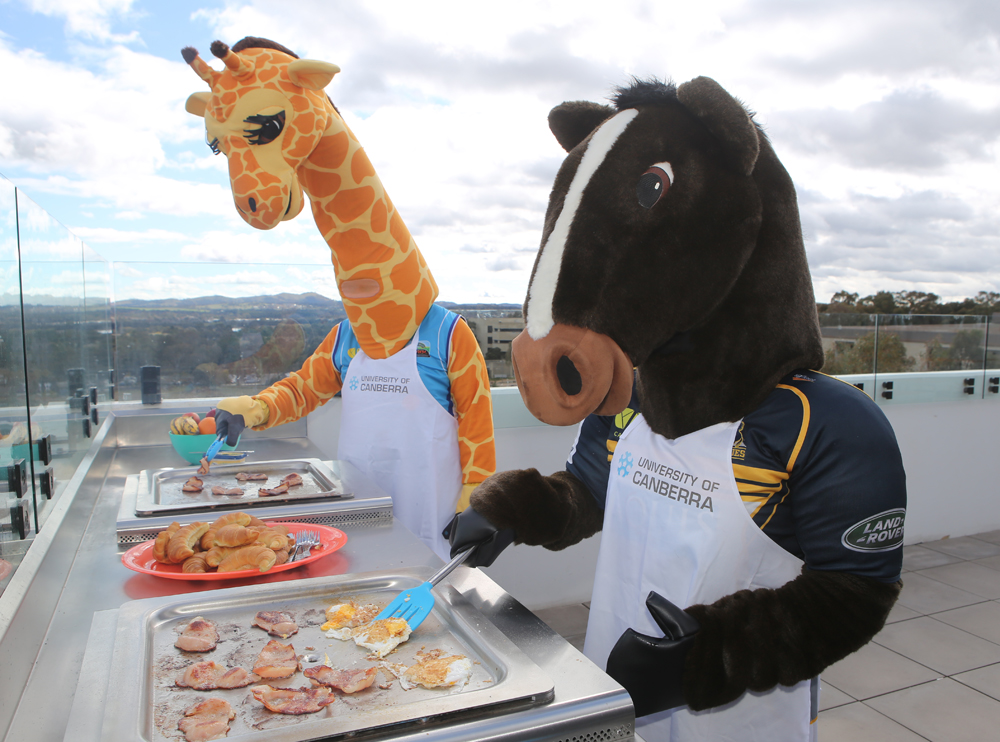 Cappie the Giraffe and Brumby Jack prepare breakfast for University of Canberra's free big breakfast to kick off its Open Day  Image via  Canberra Edu