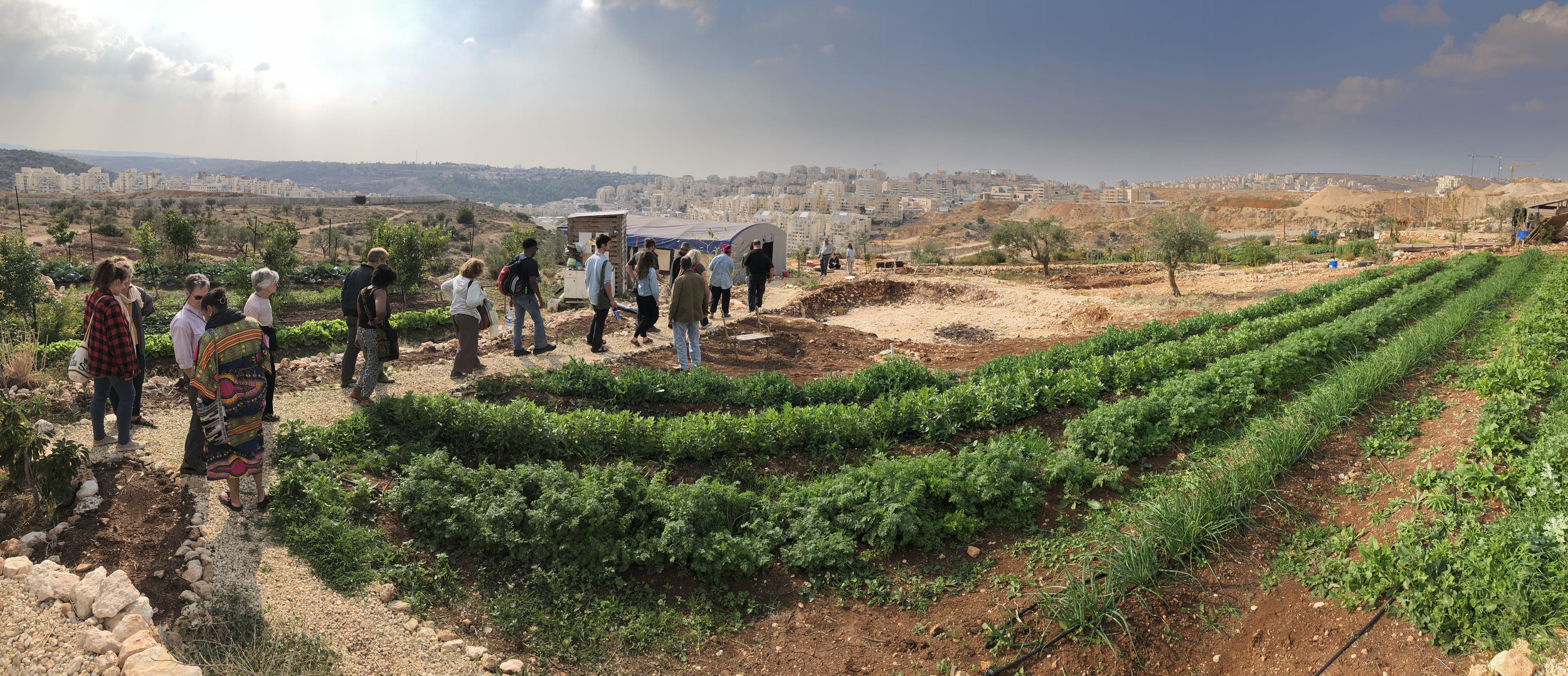 'Eyewitness Palestine delegation at the Om Sleiman farm which is surrounded by settlements. Credit Hubert Murray