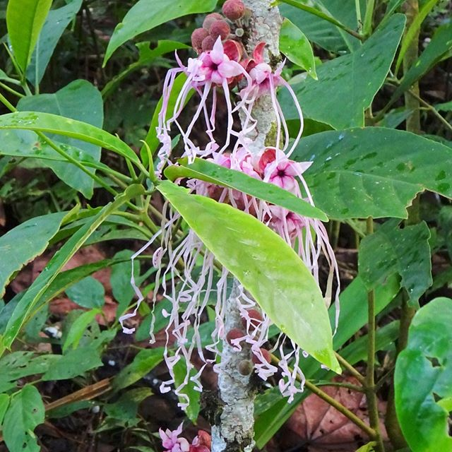Strange but True...in the Amazon forest. #nature, #tropicalflowers, #plants, #naturephotography, #plantmedicine, #retreat, #ayahuasca
