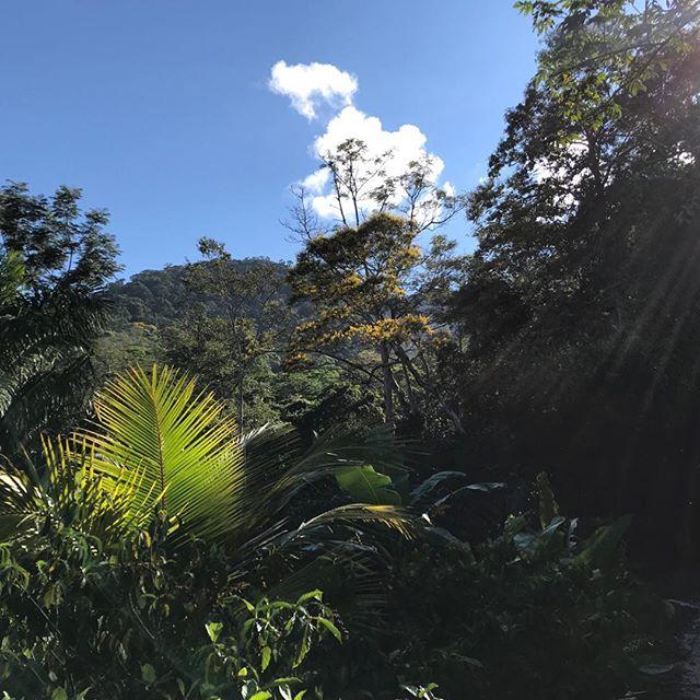Where we live... #highjungle #ayahuascaretreat #shamanicjourney #medicinalplants #shamanichealing #amazonforest