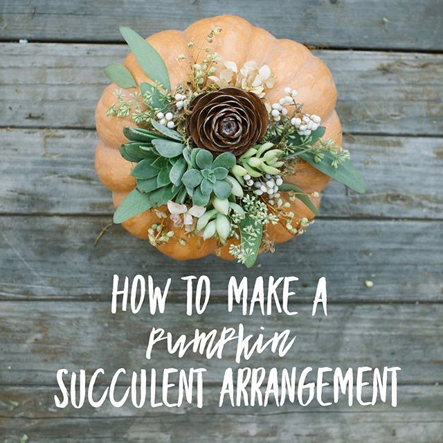 Link in Profile✨I just posted a How-To so you can make your own Pumpkin Succulent arrangement at home (including a video with Co-Host, Poppy). It's easy and makes the perfect fall fantasy accent for your home or the perfect gift! You can collect your nature elements out on a walk and it's fun for kids to help too. Don't forget to tag me if you make one!! I'd love to see!! ✨🍂🍁🌿🌵