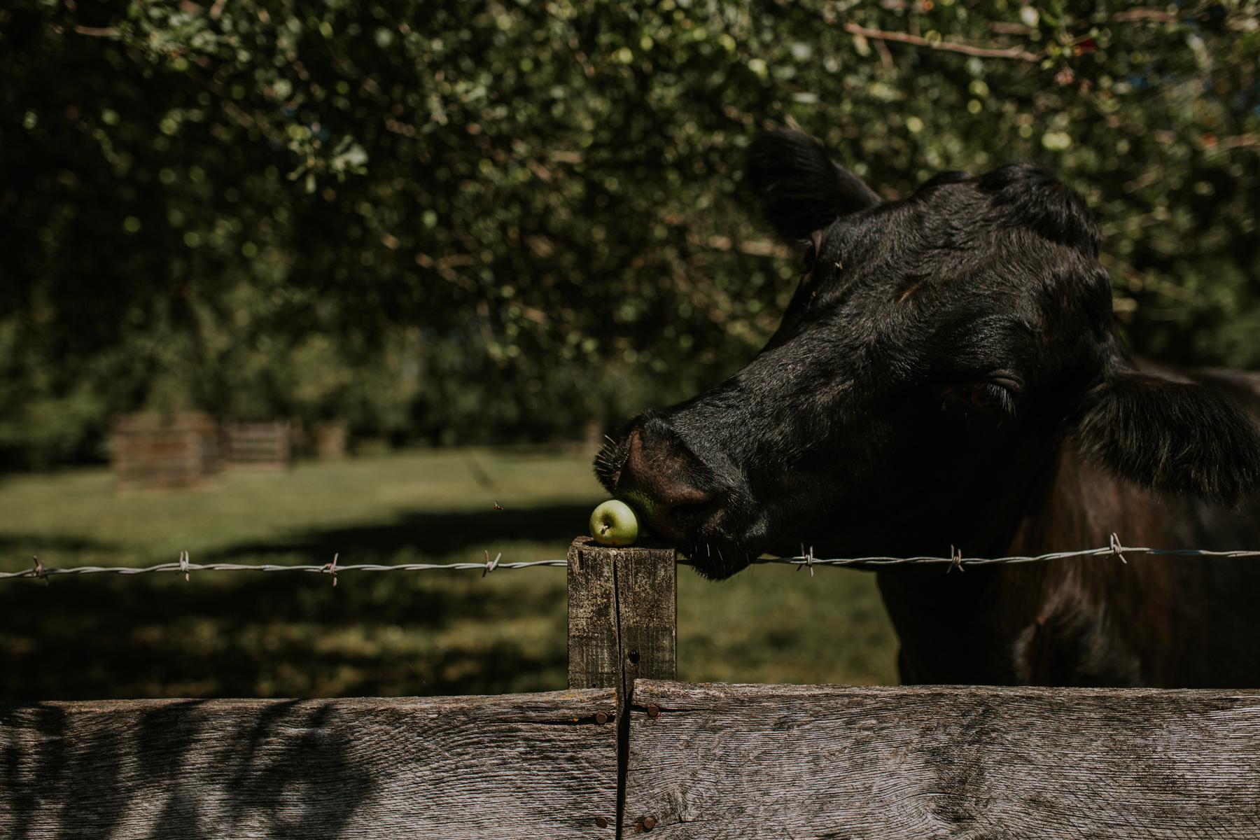 Living History Farm-4007.jpg