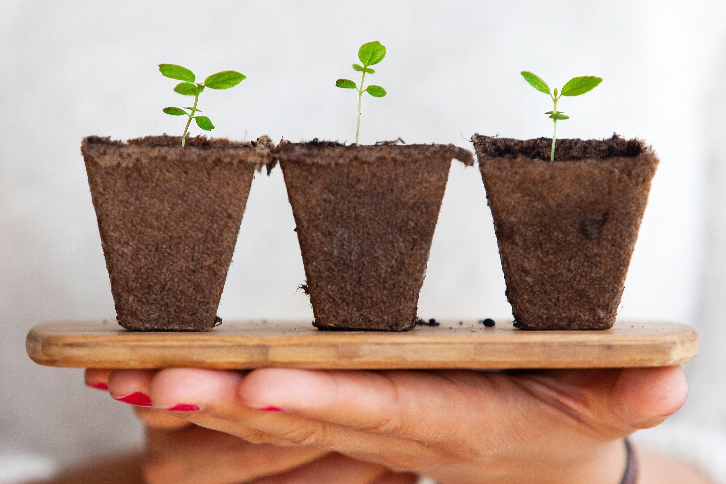 Der Deutsche Steuerberatertag wird grün! - Um den Deutschen Steuerberatertag nach Ihren Wünschen zu gestalten, brauchen wir Ihr Feedback!Dafür tun auch wir etwas: für jeden ausgefüllten Fragebogen pflanzen wir einen Baum!