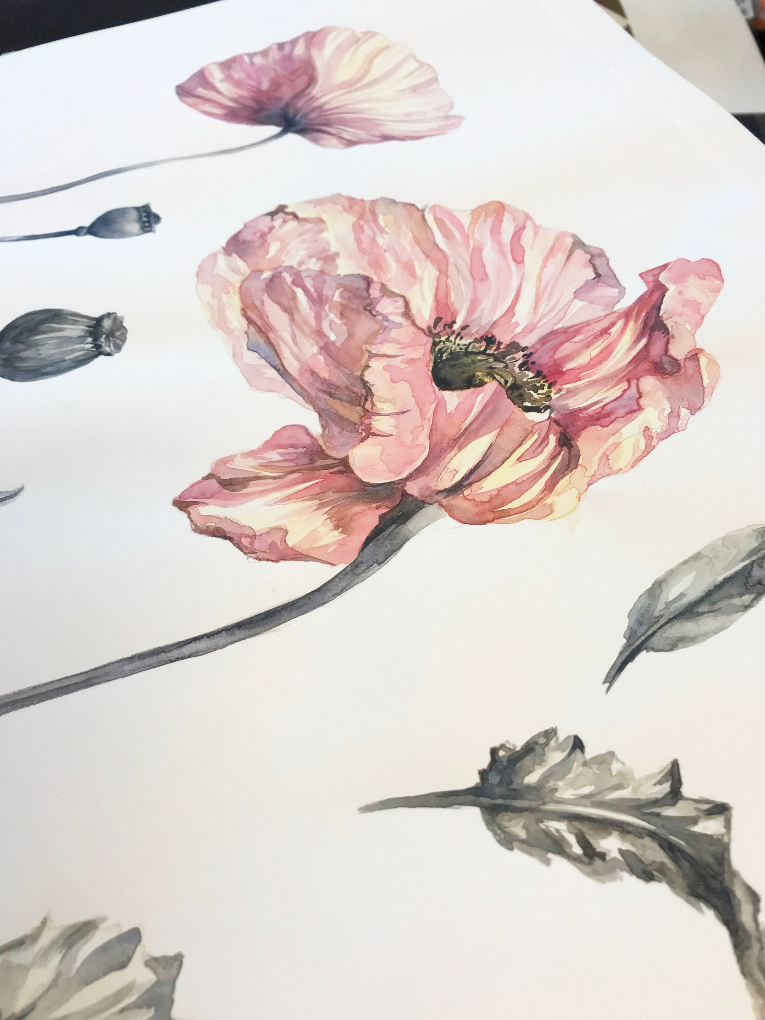 Artwork detail for 'Poppy Fields' from H&M Conscious Collection Spring 2019