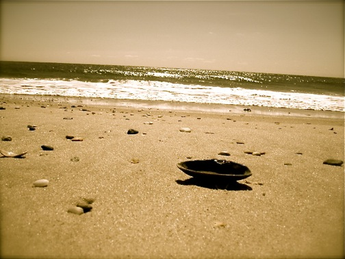 Shell on the Shore 2