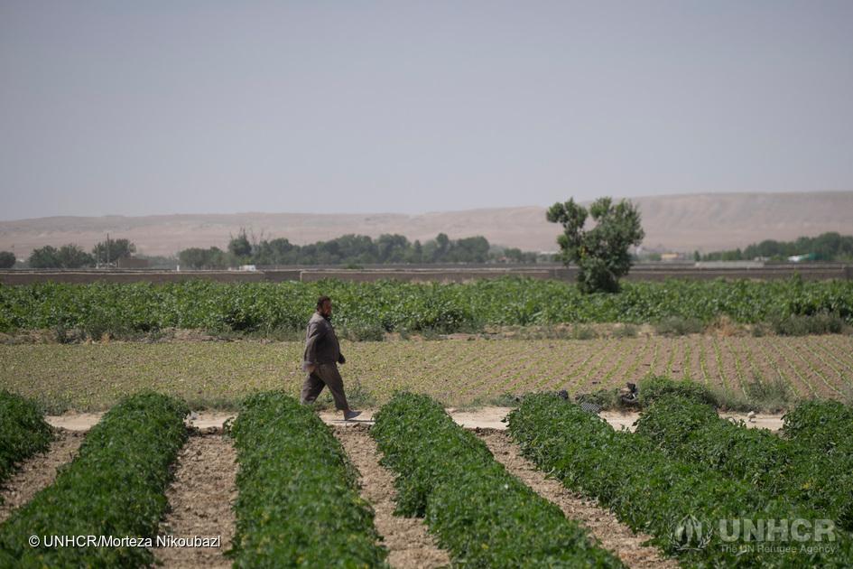 FOTO: UNHCR/MORTEZA NIKOUBAZI