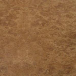 Eucalyptos Burr